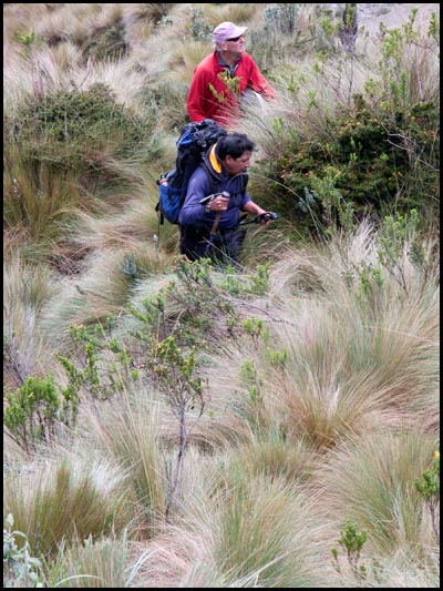 Hikers and Paramo grass.
