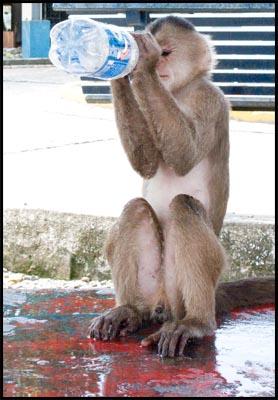 Monkey with bottle.