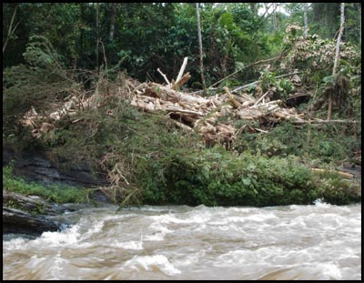 Wood pile on Rio Misahualli.