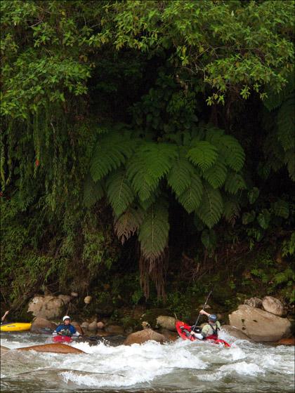 Frank_L._kayaker_ferns_Rio Misahualli_boof_Ecuador.