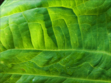 Leaf_patterns_tropical_Ecuador