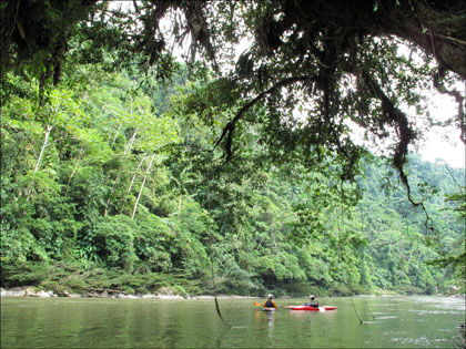 Kayaks and tropical tree on Rio Hollin, Ecuador.