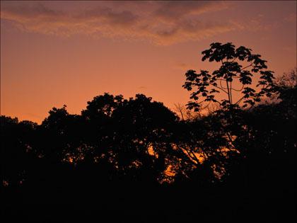 Jungle_trees_sunset