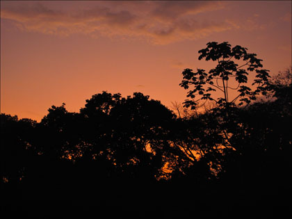 Jungle_trees_sunset