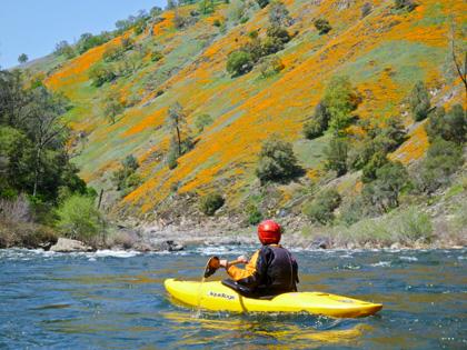 Poppies_kayaker_California