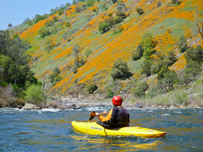 Poppies_kayaker_California