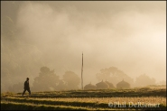 Sunrise, rice fields, Bhutan, Walking