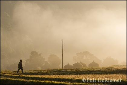Sunrise, rice fields, Bhutan, Walking