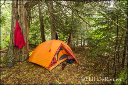 Tent_Forest_Selway_Camp
