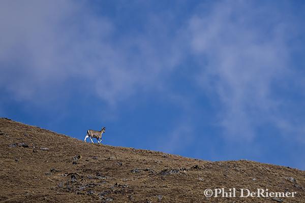 Blue_Sheep_Ridge