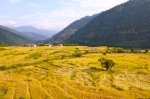 Rice_Filed_View_Bhutan