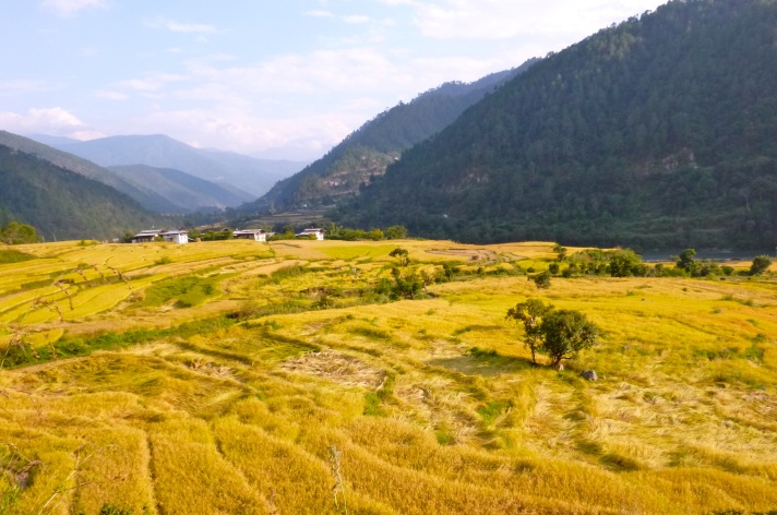Rice_Filed_View_Bhutan