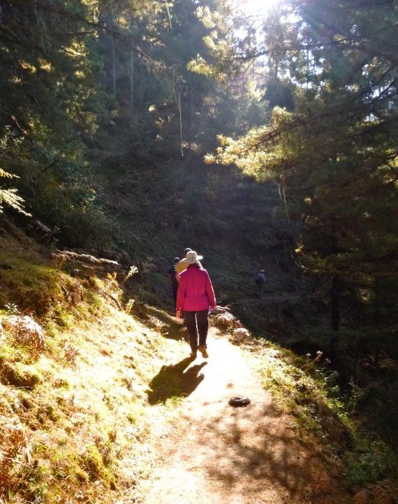 Hiking_Forest_Phobjikha_Bhutan